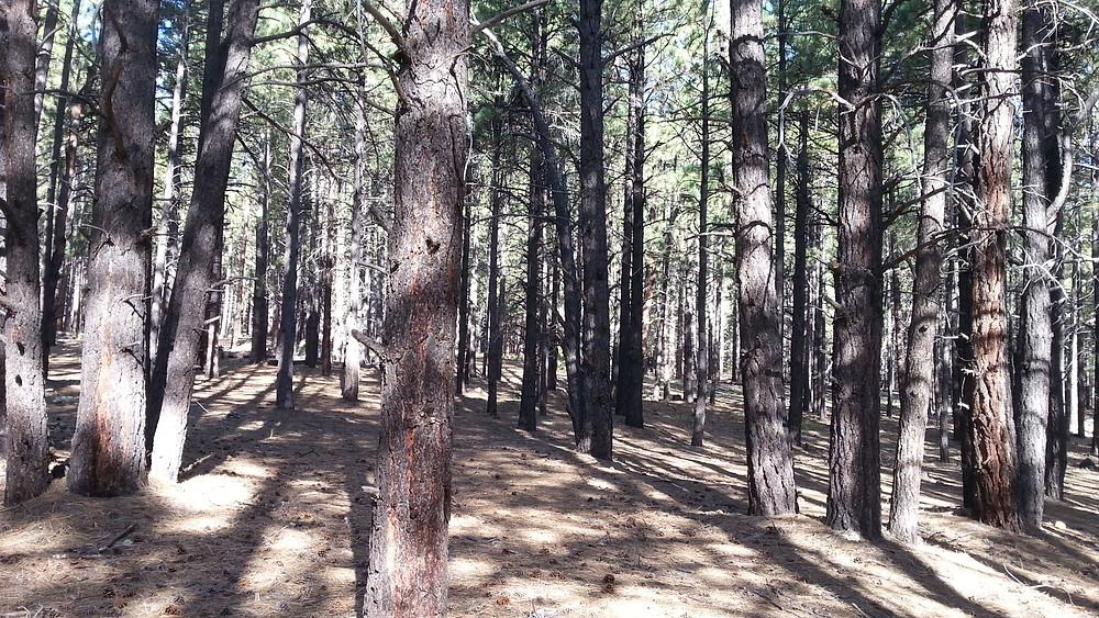 More Dense Forest.