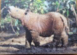 Rhino Outlet stop poaching