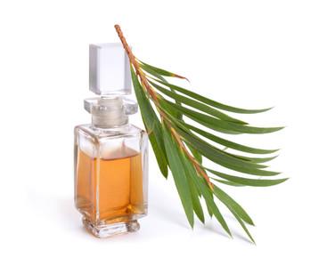 L'huile essentielle d'arbre à thé : une indispensable de la trousse à pharmacie