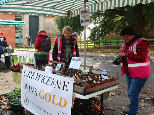 Crewkerne in Bloom selling hyacinths.