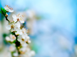 image-45886922-beautiful-white-wallpaper