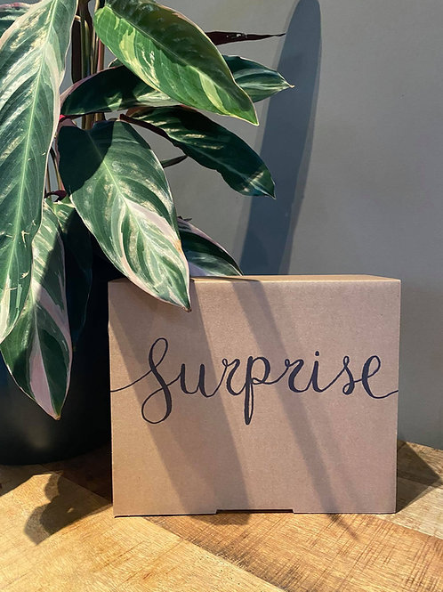 Maxi surprisebox