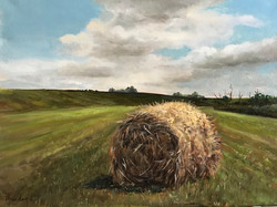 Corn Stalks30x40cm oil on canvas £250