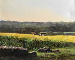 Epping yellow fields 40x50cm oil on canvas £300