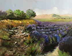 Lavander fields 40x50cm oil on canvas £200
