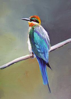 BIRD OF PARADISE 3 OIL ON MDF £40
