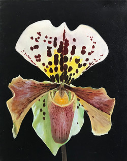 Orchide 40x50cm oil on canvas £300