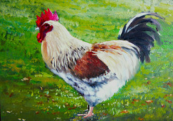 ROOSTER ON HEINAULT SOLD