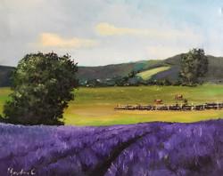 Lavanders fields 40x50cm acrylic on canvas £250