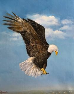 Bald Eagle 40x50cm oil on canvas £350