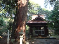 地蔵権現堂と大桧木
