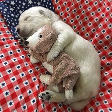 puppy with stuffed animal.jpg