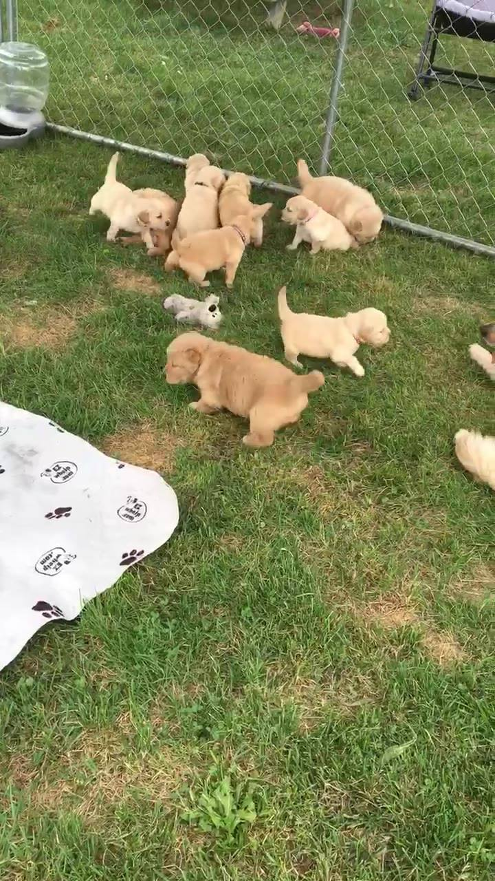 Now it's a puppy party! 🎉🐶