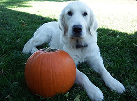 Glory by pumpkin.jpg