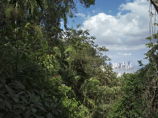 Panama's Punta Pacifica neighborhood as seen from Cerro Alcón, a hill that separates the city from the Canal Zone and has never been urbanized. Panamanians like to compare the capital's skyline to Dubai's. Panama