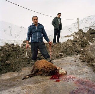An extraordinary snowfall has blocked the road to Dizin, a ski resort north of Tehran, enjoyed by the Iranian upper class. Local workers have been shoveling the snow away since dawn. Once the job is completed they sacrifice a ram, as required by the tradition. Iran, Dizin, February 2009.
