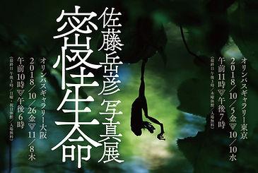 mikkaiDM_F_OL_re.jpg