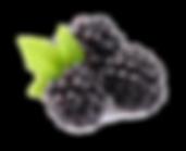 Blackberry-Fruit-Free-Download-PNG.png