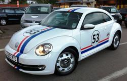 VW Beetle - Herbi