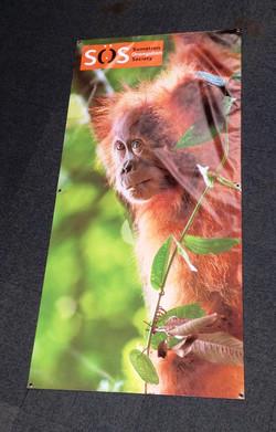 SOS Orangutan Charity