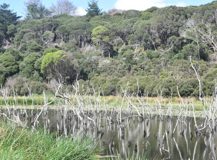 Kai Iwi Lakes surrounds
