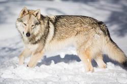 Aken's son: Newton Lobos de Bilsaru