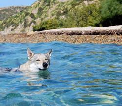 Uzi swimming
