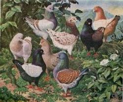 Tunnicliffe  painting  1 199x165.jpg