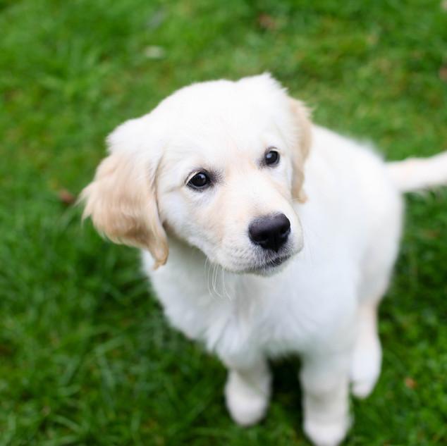 7.9.17 - Nala Puppy-2025.jpg