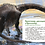 Thumbnail: Качур Елена / Динозавры и другие пресмыкающиеся (илл. Балатенышева Анастасия)
