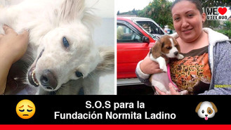 La fundación Norma Ladino se encuentra en crisis
