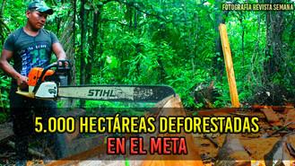 Meta es el departamento más golpeado por la deforestación