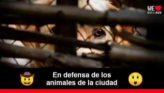 Villavicencio tendrá ruta de atención en casos de maltrato animal