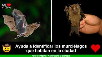 Villavicencio está desarrollando investigación sobre los murciélagos