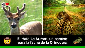 En el llano se encuentra la reserva natural de la sociedad civil más grande de Colombia
