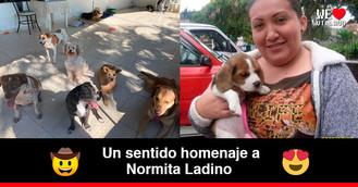 Norma Ladino, la mujer que rescató del abandono y el maltrato a los animales de Villavicencio