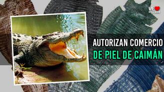 Comercio de piel de caimán genera polémica