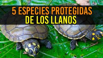 Conozca las 5 especies protegidas por el Proyecto Vida Silvestre