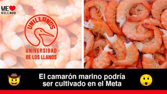 Unillanos cultivará camarón marino sin necesidad de agua de mar