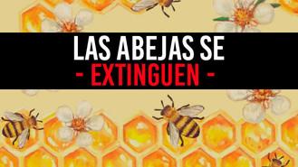 El Meta enciende las alarmas por muerte masiva de abejas