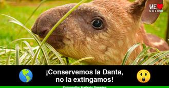 La danta, una especie endémica en peligro de extinción
