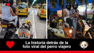 Memo, el perro que ha causado sensación en Villavicencio