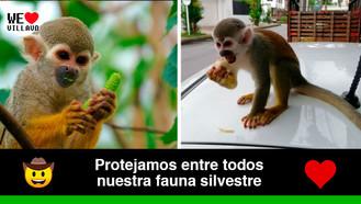 Personas que alimenten primates serán sancionadas por el código de Policía