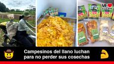 Aritos de Oro, los snacks saludables elaborados por campesinos llaneros