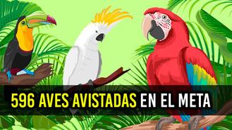 Colombia ocupa primer lugar en avistamiento de aves