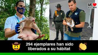 Más de 600 animales de fauna silvestre fueron salvados en el Meta