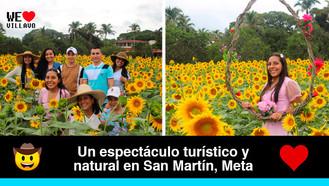 El atractivo campo de girasoles de Ganadería Hacienda la Macarena