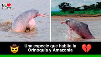 """""""Adopta un Delfín de Río"""", una iniciativa para salvar a estos ejemplares de la extinción"""