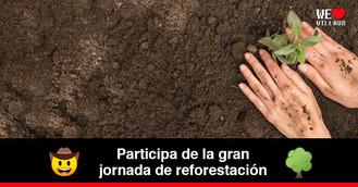 Más de 3.000 árboles serán sembrados en 20 puntos de Villavicencio