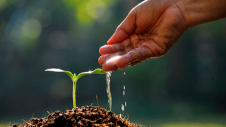 Más de 1.000 árboles sembrados en Mesetas